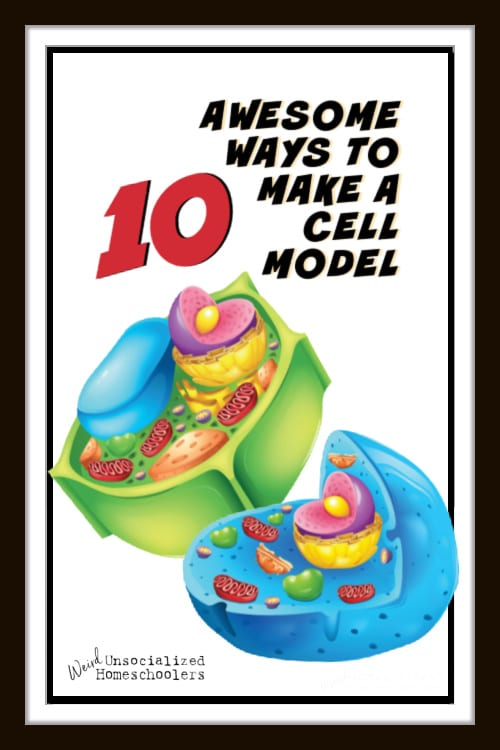 10+ Awesome Ways to Make a Cell Model