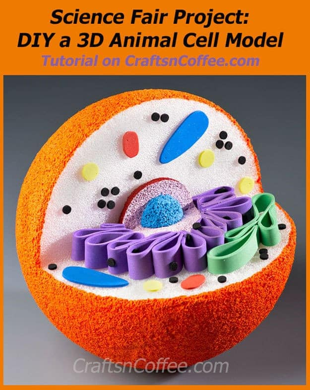 10 awesome ways to make a cell model weird unsocialized homeschoolers rh weirdunsocializedhomeschoolers com animal plant cell 3d model animal plant cell 3d model