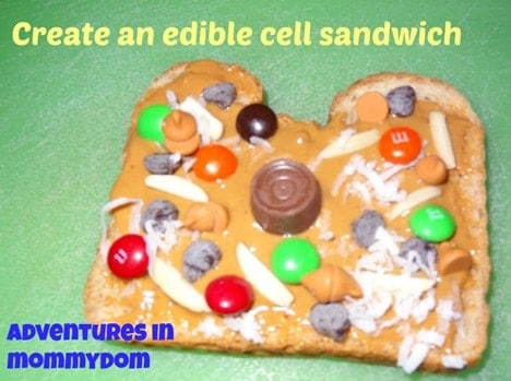create-an-edible-cell-sandwich