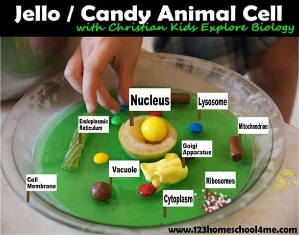 jello cell model